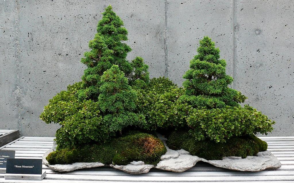 Decorare la casa con le piante